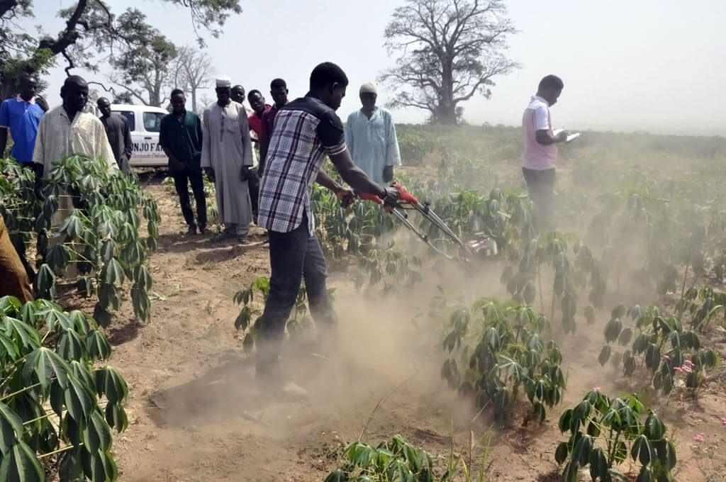 Transforming cassava production in Africa through sustainable weed management technologies